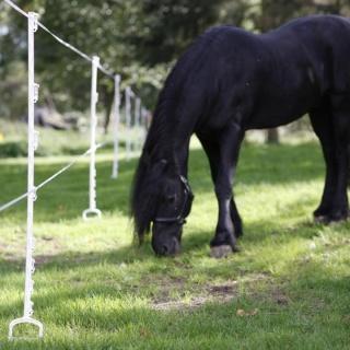 Set stalpi pentru cai